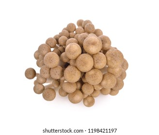 fresh shimeji (brown beech) mushroom on white background