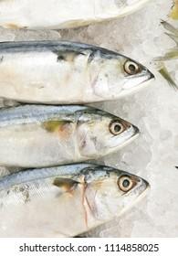 Fresh Short Mackerel fish on ice at the fresh market