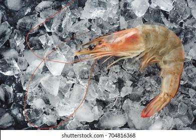 Fresh shrimp on ice. Seafood.