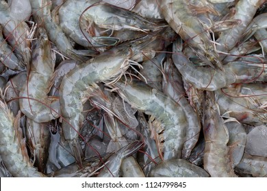 fresh shrimp or white, Litopenaeus Vannamei for imports and exports