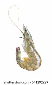 fresh shrimp/prawn on white background