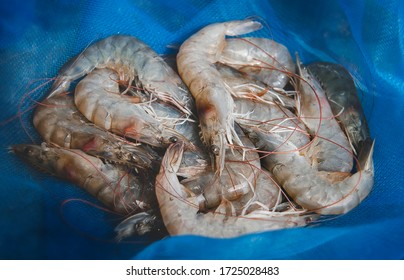 Fresh shrimps group in fishery seine with outdoor low lighting.