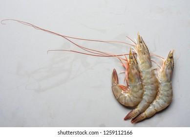 Fresh Shrimps on Gray. Fresh shrimp from the sea, placed on the floor. Three fresh shrimp. Fresh seafood.