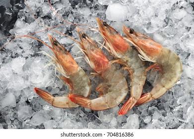 Fresh shrimps on ice. Seafood.