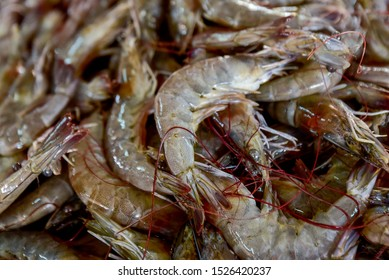 fresh shrimps prawns boiling king prawn blue leg shrimp a ton of shrimp seafood boiling into red skin prawn