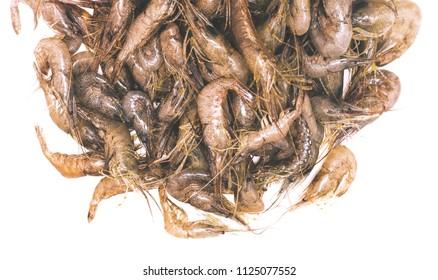 fresh shrimps in white