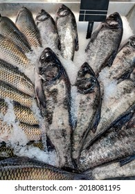 Fresh silver carp fish (aka silver carp, carp, hypophthalmichthys, aristichthys) laid out in ice for sale