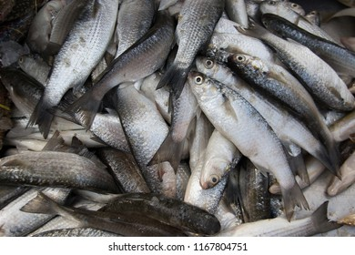 fresh silver fish catching from ocean in Thailand street market