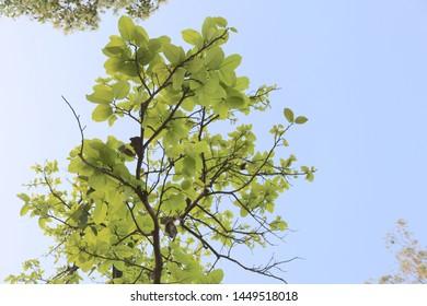 Fresh Sky Bright Green Leaf