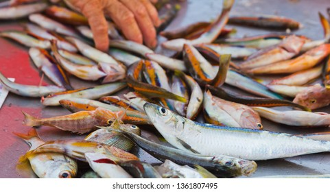 Fresh small fishes at a market stall in the island of favignana, trapani, sicily, italy