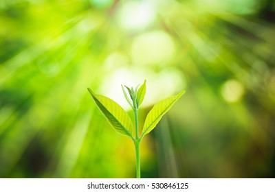 Fresh small plant growing on blurred green nature background with bokeh under sunlight at the forest.