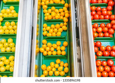 Fresh small tomatoes on a green conveyor belt in a Dutch greenhouse ready for further processing