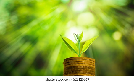 Fresh small tree growth on gold coins with abstract blurred fresh green nature background with bokeh and sunlight, Investment concept.
