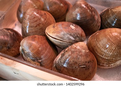Fresh smooth clams for sale in the market. Callista chione. Clams from Galicia, Spain