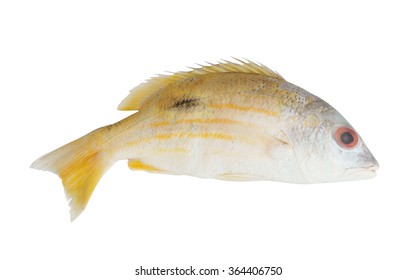 Fresh snapper fish isolated on white background