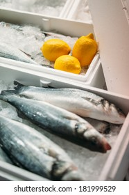 Fresh snook fish ready to be sold - gourmet market - with yellow lemons and clean ice