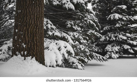 Fresh snow covered forest trees