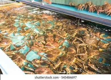 Fresh snow crab in fish market
