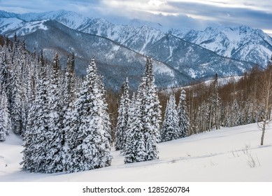 Fresh Snow in Evergreens from Beartrap Canyon, looking across Big Cottonwood, Wasatch Mountains, Uinta-Wasatch-Cache National Forest near Salt Lake city and Alta, Utah