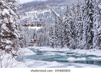 Fresh snow on trees at Toby Creek near Invermere in Kootenay National Park, British Columbia, Canada