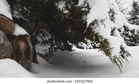 Fresh snow tunnel