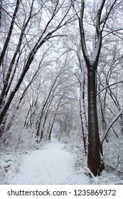 Fresh snowfall along a hiking trail in northern Illinois