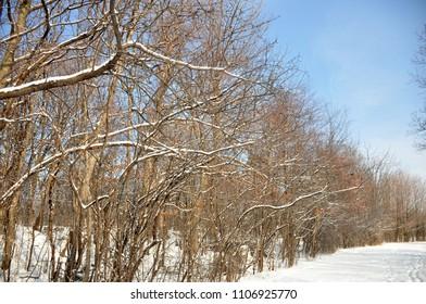 Fresh snowfall on branches