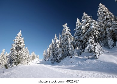 Fresh snowfall waiting for the first skiers