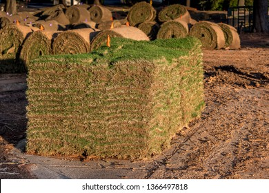 Fresh sod grass squares stacked on pallet ready for commercial landscape installation. Rolls of sod and sod squares on construction site.