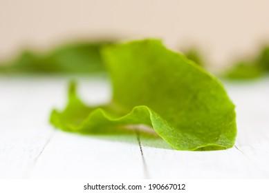 fresh sorrel leaf on white wood table background