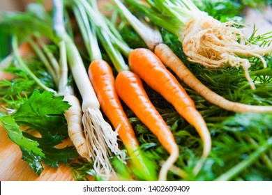 Fresh soup ingredients - young vegetables for delicious organic veggie stock -  base for all the soups: carrots, parsley roots, leeks, celeriac, celery, dill, parsnip. All from local veggie farm shop