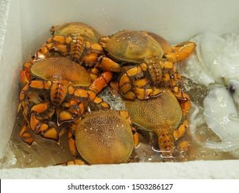 fresh Spanner crabs or frog crabs (Ranina ranina) on ice for food.