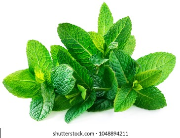 Fresh spearmint leaves isolated on the white background. Mint, peppermint close up
