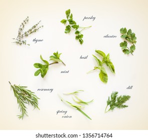 Fresh spicy herbs isolated on white background. Vintage style.
