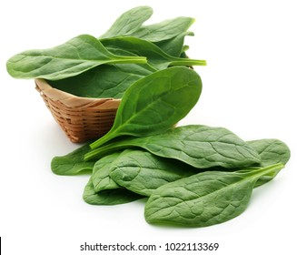 Fresh Spinach in a basket over white background