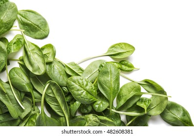 Fresh spinach bundle isolated on white top view. Vegetable banner or heading design. Copy space. Studio shot