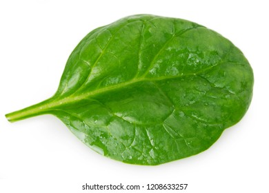 fresh spinach isolated on white background