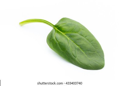 Fresh spinach isolated on the white.