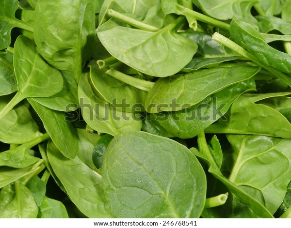 Fresh spinach is a leaf vegetable or leafy green