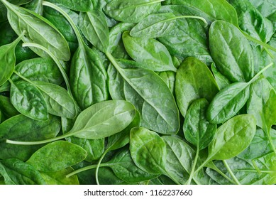 Fresh spinach leaves as background, top view