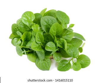 Fresh spinach leaves on a white background