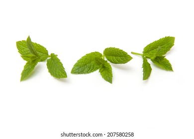 Fresh sprig of mint isolated on a white studio background.
