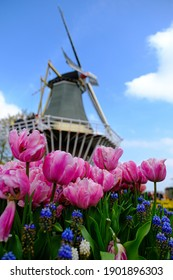 Fresh Spring of Europe with Beautiful Windmill