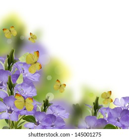 Fresh spring  flowers of periwinkle, butterflies  on summer background