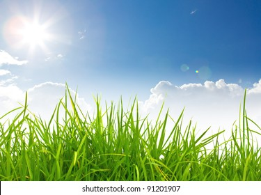 Fresh spring green grass and blue sky with sun