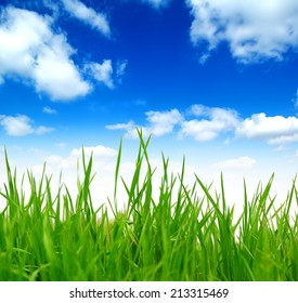Fresh spring green grass over blue sky with white clouds