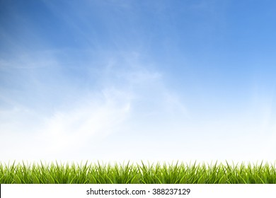 Fresh spring green grass under beautiful blue sky, white wispy cloud and sunlight - use for background or backdrop in summer holiday or environmentally friendly concepts