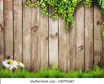 Fresh spring green grass with white flower camomile and leaf plant over wood fence background
