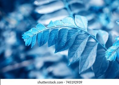Blue Nature Background Images, Stock Photos u0026 Vectors  Shutterstock