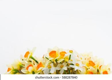 Fresh spring Light and dark yellow daffodils flowers border row on white desktop
